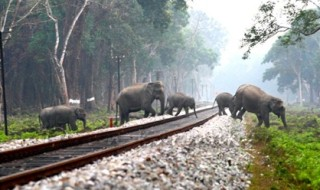 The carcasses were removed from the tracks by the forest and rail personnel