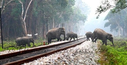 The NFR has set up a four-member joint enquiry panel with the state Forest Department to probe