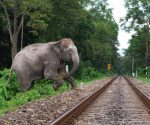 The track passes through the elephant corridor