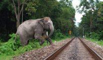 The track passes through the elephant corridor