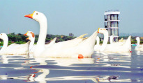 """The lake and its vicinity """"shall remain out of bounds for general public till further orders"""""""