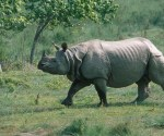 The rhino may have been killed at least two days back