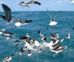 The reason for the migration is to be found in global warming