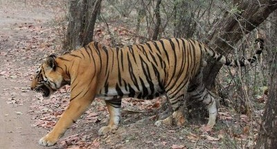 The Bannerghatta National Park is in fact barely 25 km from the heart of Bengaluru