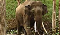 The wild elephant attacked a forest department vehicle occupied by three officials
