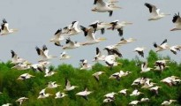 The water bodies of Jharkhand managed to draw as many as 37,000 migratory birds belonging to 29 species