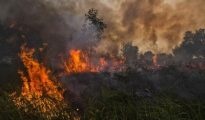 All villagers are trying to douse fires in the nearby forests for the past two days
